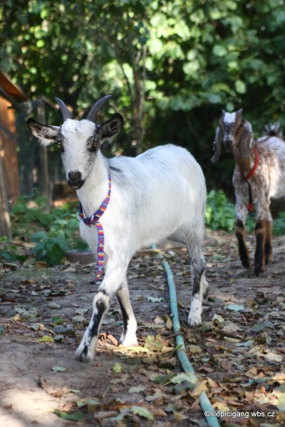 dolly buster video strikani na kozy